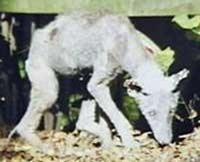hairlessdog