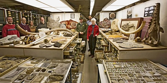 Paleontology Collection and Staff