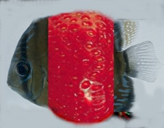 berryfish